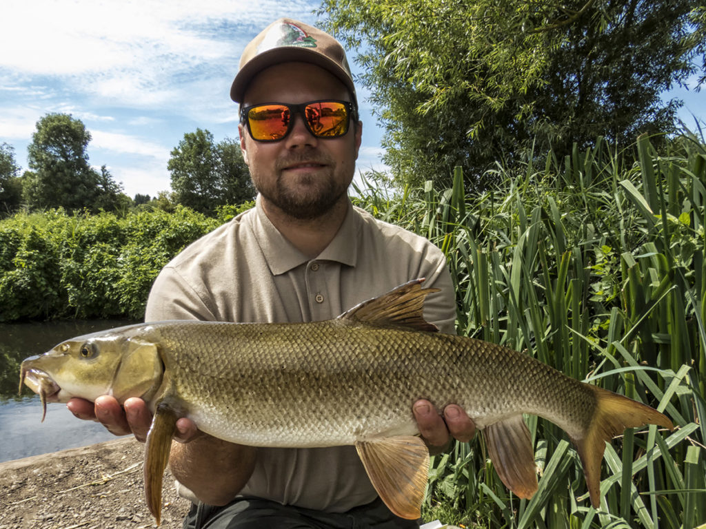 nagy márna, big barbel