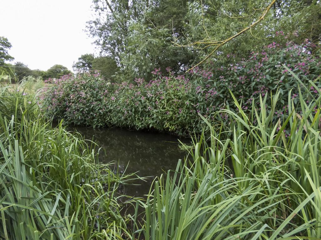 Nyári folyó a partot szegélyező dús növényzettel