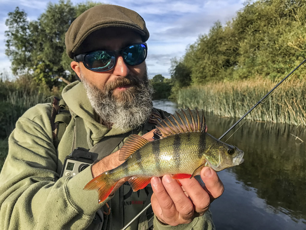 pergettet sügér folyóból, beautyfull perch on lure