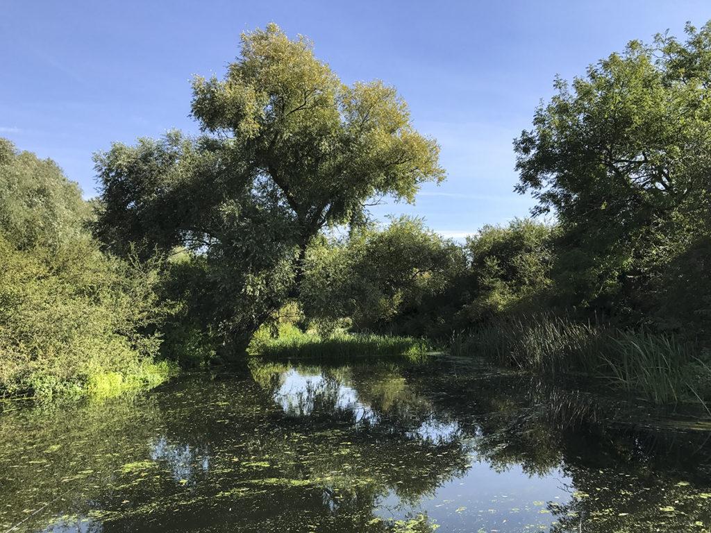 folyó mellékágában létrejött tavacska, small pool on the river