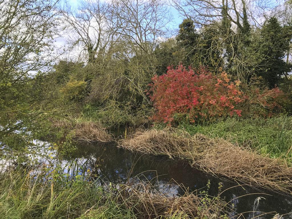 ősz a folyóparton, atum on the riverside